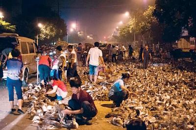 如此通宵满街卖鸭子的状况已连了十余年。
