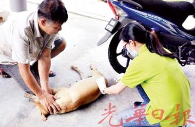 市民纷纷携带家犬注射疫苗。