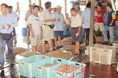 海虾量逐年渐少。
