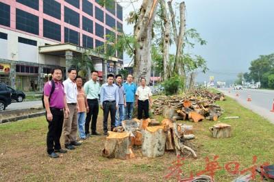 李凯伦(左4)澄清,罗占路去峇冬丁宜方于,左侧旁的树将开展移植,不要砍伐。