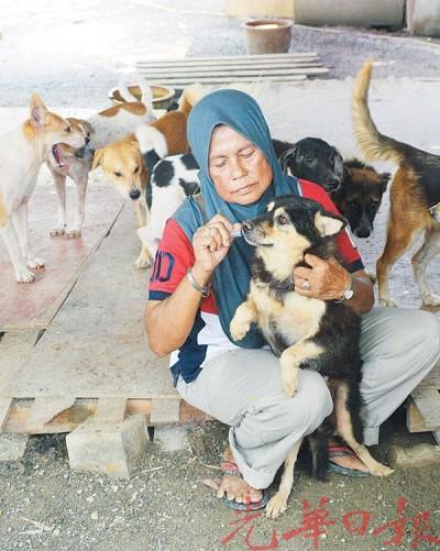 Mak Intan把抗生素注入狗只口中。