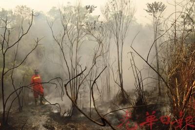 印尼当局已鉴定有210宗涉嫌公开焚烧案件。
