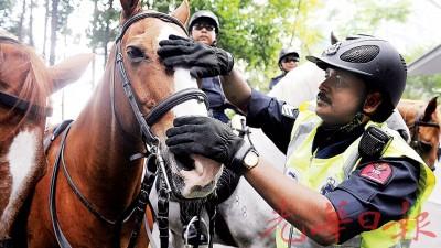 骏马骑警出现在吉隆坡市中心一带,分外瞩目,托马斯曹长轻抚马儿,准备出巡了!