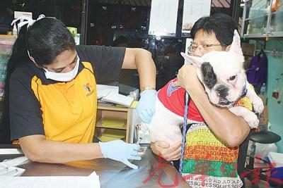 自此有饲主必须也狗只注射预防疫苗,才得更新年度执照。
