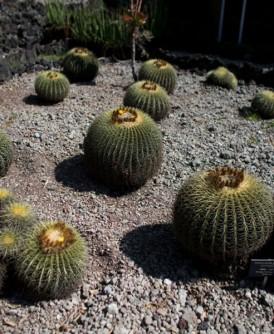 濒危仙人掌大多集中在中南美洲。