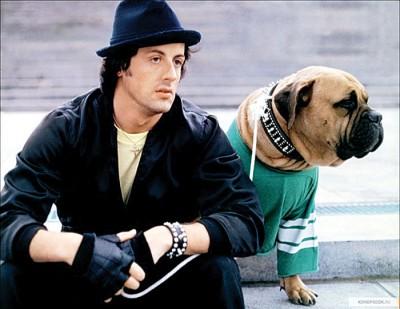 史泰龙带自己只狗入行参与《洛奇》的演出。