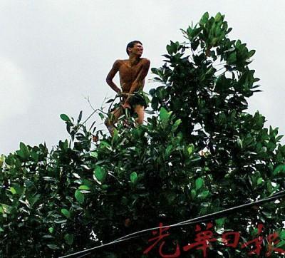 男子半套裸体爬上树梢。