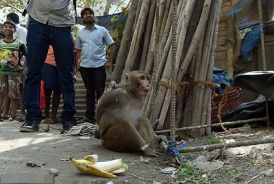 顽皮猕猴无力反抗。