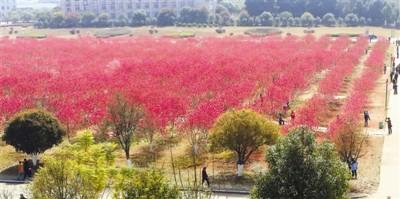 小区一大片美丽的桃花林,吸引大批游客前来观赏。