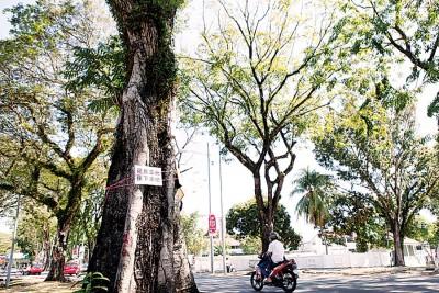 """槟城论坛于较早前的见面会上,向州政府提出制定""""植树大蓝图""""的建议,并获得州政府的初步认可。"""