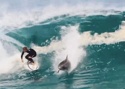 澳洲青年冲浪 有海豚陪同