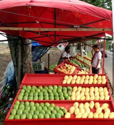 加了至亚罗士于道路旁已起卖各类芒果的粗摊子。