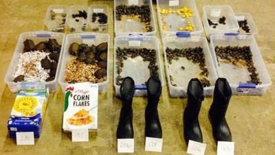 同一天于徐凯身上搜获的51徒乌龟和其它物品。