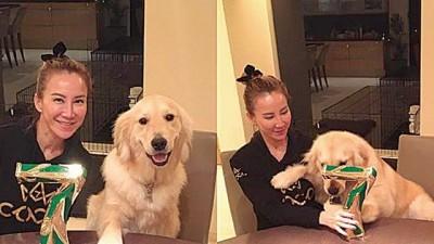 李玟拿奖杯想与爱犬分享得冠喜悦,不料却被爱犬当玩具。