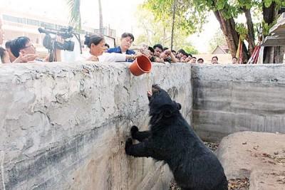 庙方人员展示如何喂食黑熊。
