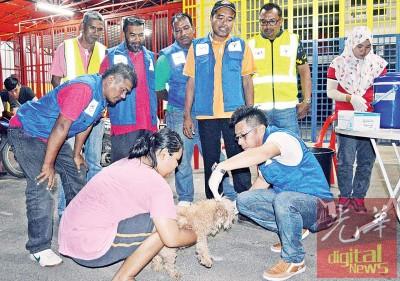 玻州兽医局人员在新路义消队会所,提供狗只注射狂犬病疫苗,及加挂免疫标志狗牌的服务。后右2为沙哈鲁。