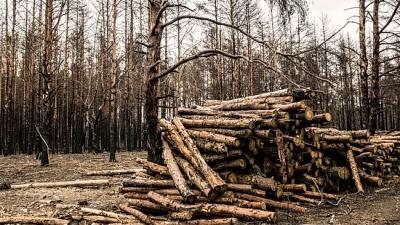 私商贩潜入禁区,黑砍伐树木。