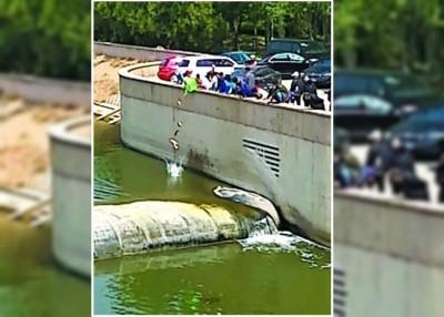 目击者指当时十多人口抬着鱼筐,以250公斤活鱼放生进潮白河内。