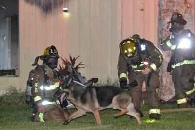 醒目狗马克斯(中)协助消防员救人。