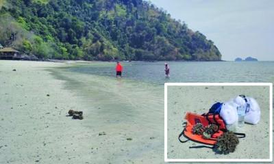 这群游客采摘活珊瑚(小图),打算拿回去当纪念品。