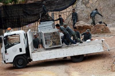 管理者表示每日只能迁走20但虎,预测要7天才能悉数迁走。(法新社照片)
