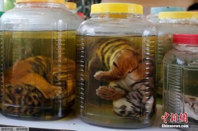 从庙里搜查出来的30多个瓶瓶罐罐,里面装的大多是虎骨、虎鞭和虎皮等,还有一些熊和豹子的器官及鹿茸。