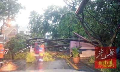 被吹倒的大树压垮一个木制建筑物。