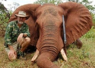 博尔萨克曾经猎杀大象并吃象肉。