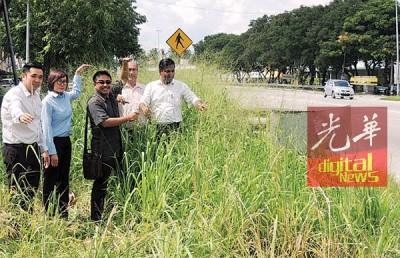 5名市议员不满大道的野草比人高,左起方美铼、王育璇、祖基菲、阿玛和大卫。