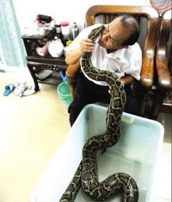 海南海口68年市民施继民一直与一条大蟒蛇同居,两者相处就使亲人般。