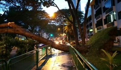 中峇鲁大树连根拔起,横跨四条车道,双向车量无法通行2个多小时。