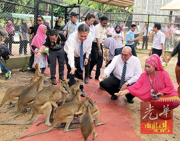 利查(蹲者右2)、阿都拉新(右3)与媒体一起喂袋鼠吃面包。