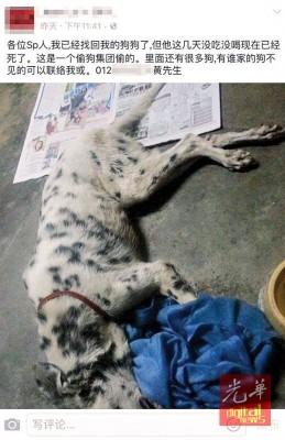 事主在面子书发布寻获爱犬的消息,可惜该斑点狗最终虚脱毙命。
