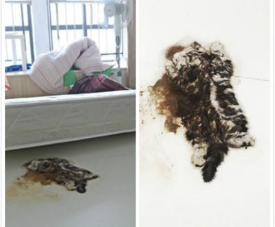 刘女以床褥下发现一具猫干尸,早已为杀成如纸片般薄。