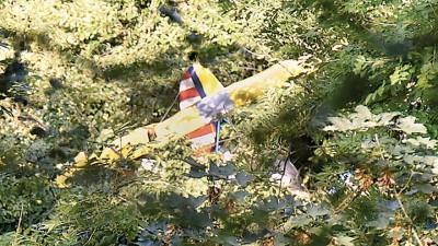 小型飞机失事坠落,机师被迫在离地25米高的树顶度过一晚,最终获救。