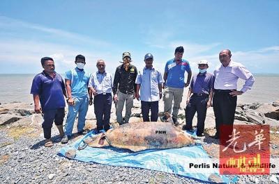 卡在海岸边石块缝隙间的死亡海豚,成功被志工们移出来后进行埋葬。