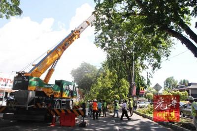 因为迁移一棵树,导致槟城青草巷交通陷入瘫痪。