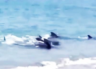 鲸鱼游向浅水区。