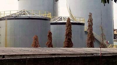 肇事工厂的几棵小树被发现已干枯,是否因气体泄露造成尚待当局证实。