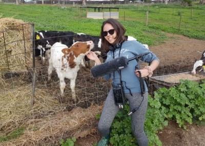 格林收录牛只叫声。