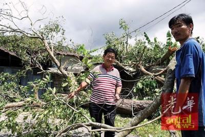 社委会主席叶荣顺(左)及屋主李清河(右)协助移开老树枝桠。