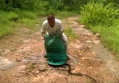 庄园管理人手拿的袋装满了蛇。