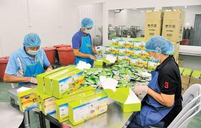 生产部员工做足卫生装备,确保产品卫生。