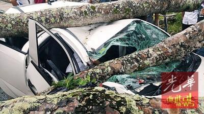 树木被狂风吹倒压毁轿车,司机受困于车内,幸亏被救出(图取自网络)。