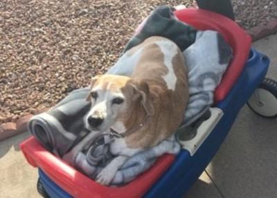 他们又带着坐在小车子上的黛西外出,享受阳光。(互联网图片)
