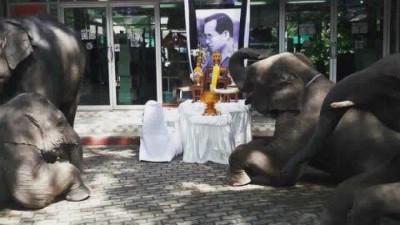 多头大象向泰王遗像跪拜。