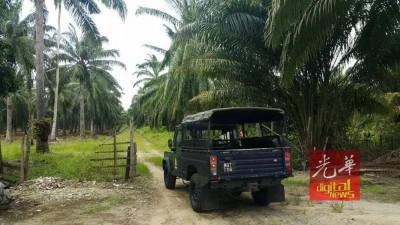 峇冬丁宜中港棕榈园深处发现一具身份不明男尸。