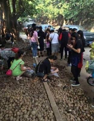 大家支持买马铃薯,吃马翁会早日回乡。