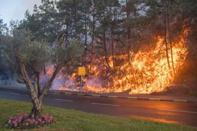 以色列发生山火,朝怀疑是武装分子所为。(法新社照片)