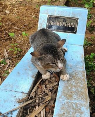 因非常想念已经过世的主人,这只悲伤的小猫在主人坟前守了1年之久。(网页截图)